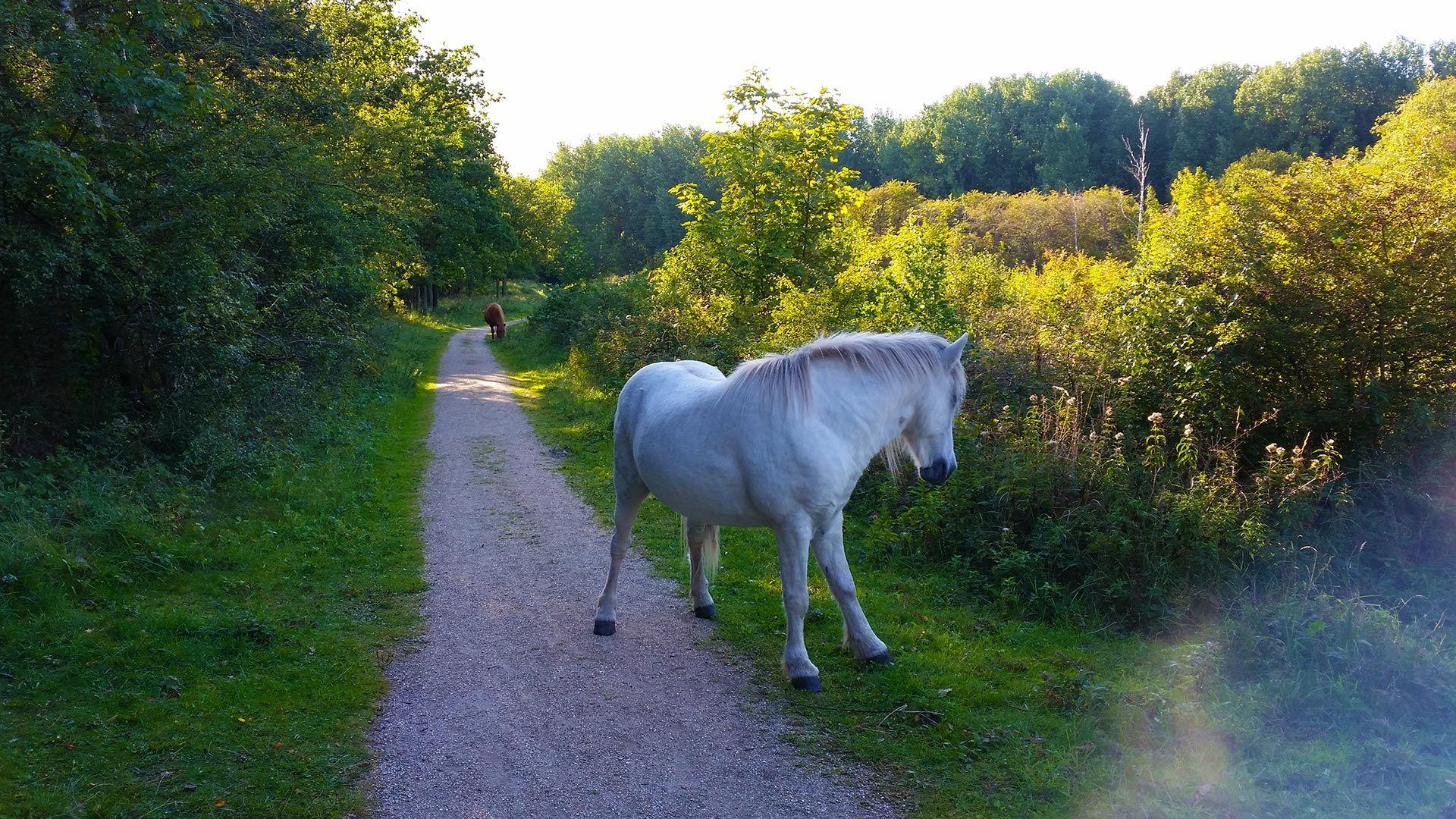 Dünen Oostvoorne Naturreservat