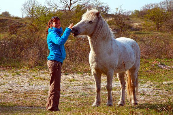pferde-oostvoorne