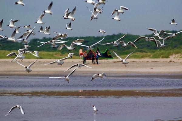 Vögel im Kiterevier
